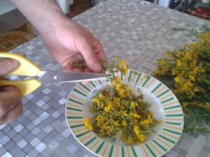 iperico taglio fiori