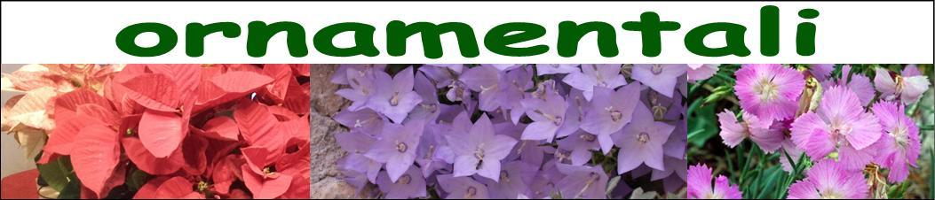 ornamentali