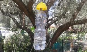 trappola a bottiglia con tappo speciale ad attrattivo olfattivo